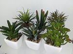 Artificial Succulent plants in pots