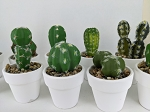 Artificial cactus plants in pots